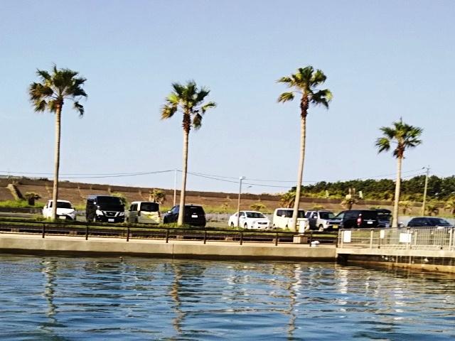 新居海釣り公園 釣果