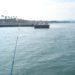 【釣果報告】新居海釣り公園で11目釣りを達成